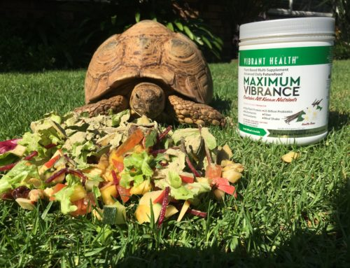 A Story About A Tortoise And Maximum Vibrance